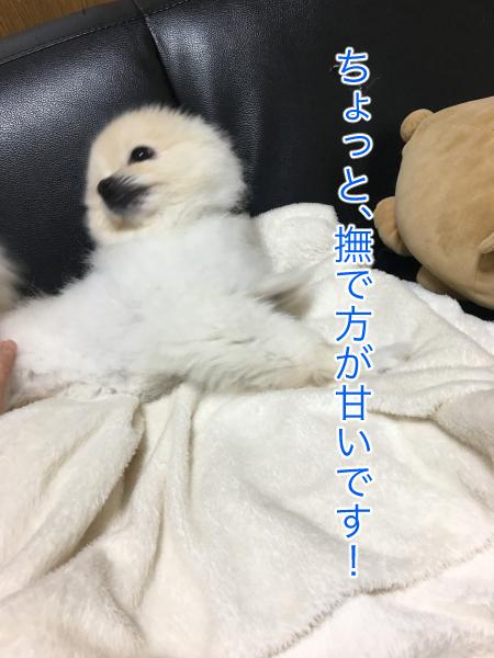 IMG_8563blog.jpg