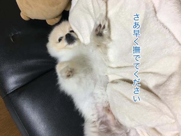 IMG_8565blog.jpg