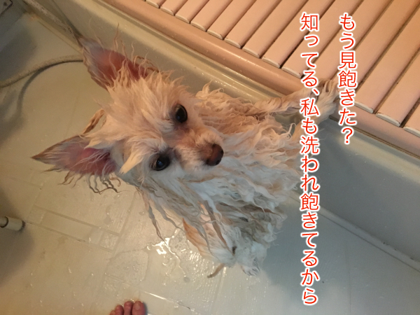 IMG_8660blog.jpg