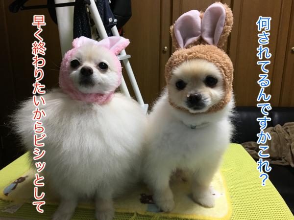 IMG_9036blog.jpg