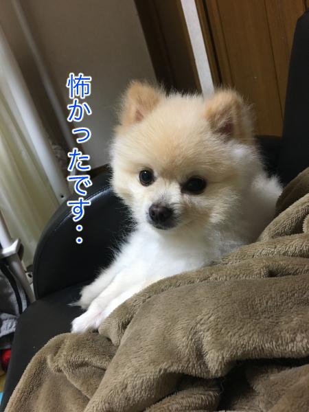 IMG_9120blog.jpg