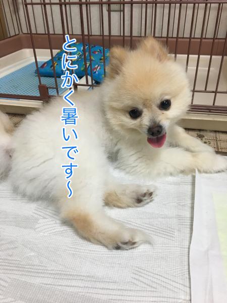 IMG_9127blog.jpg