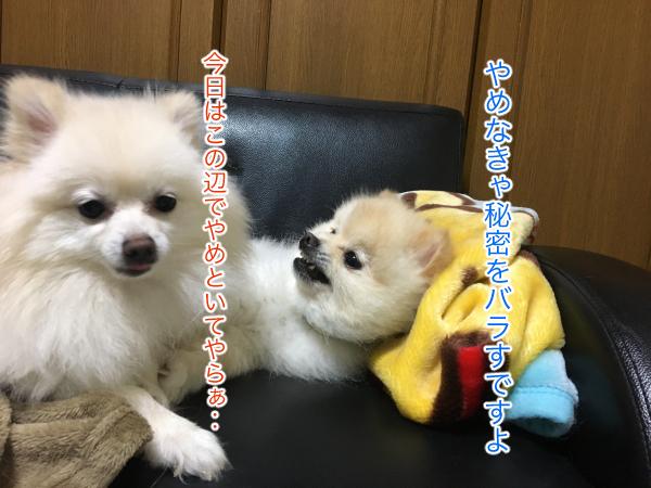 IMG_9402blog.jpg