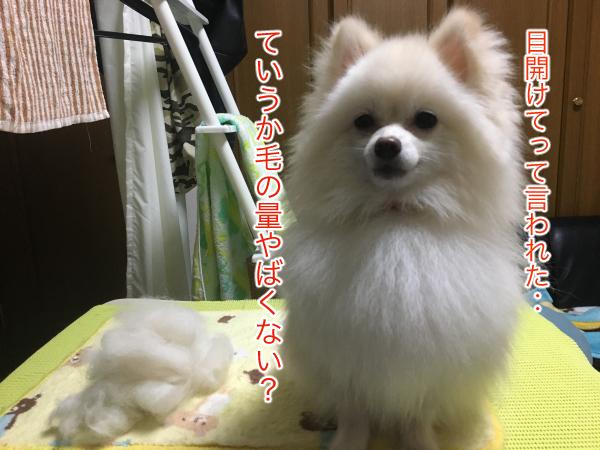 IMG_9482blog.jpg