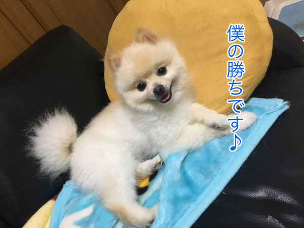 IMG_9487blog.jpg