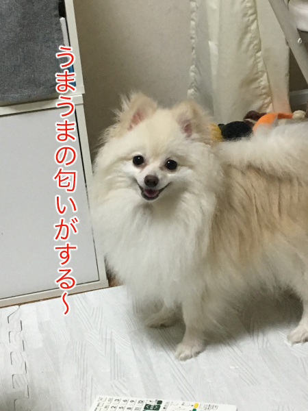 IMG_9617blog.jpg