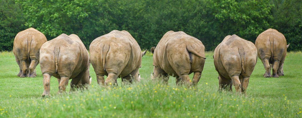 rhinoceros-3471555__480.jpg