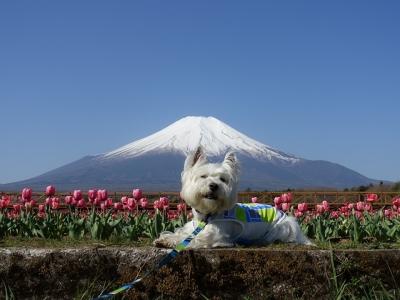 富士とロビン1