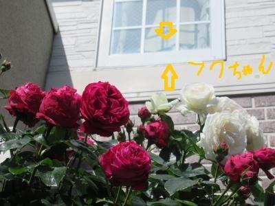 IMG_5490_convert_20180513094412.jpg