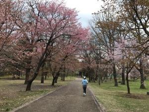すずらん公園で花見ラン