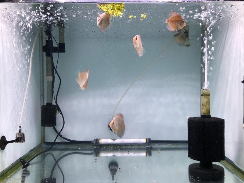 幼魚2カ月
