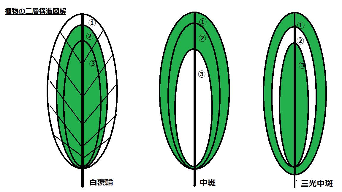 植物三層構造