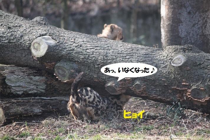 70 - コピー
