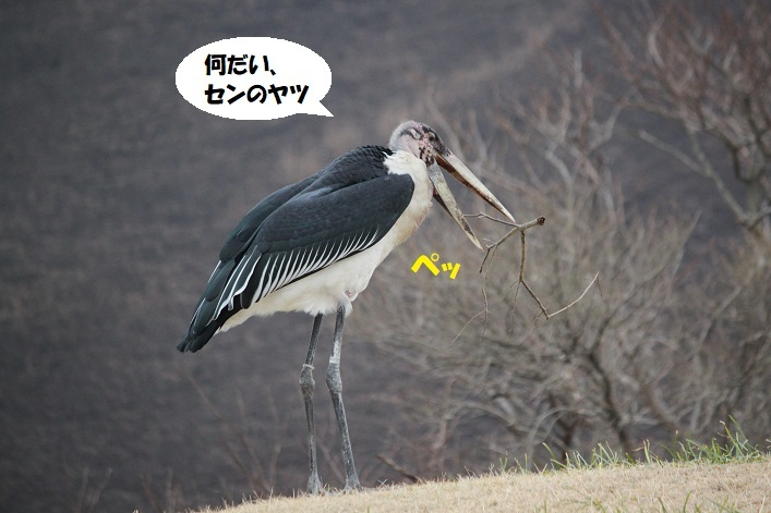 248 - コピー