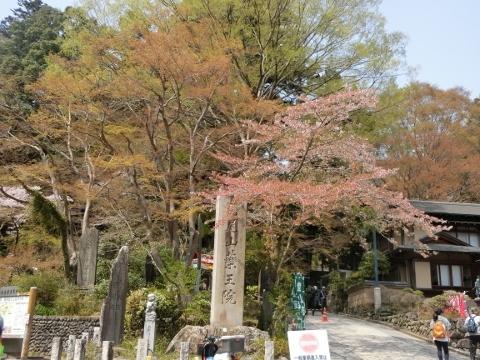 2018-04-04 高尾山 011 (480x360)
