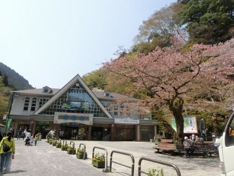 2018-04-04 高尾山 012 (480x360)