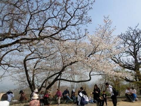 2018-04-04 高尾山 074 (480x360)