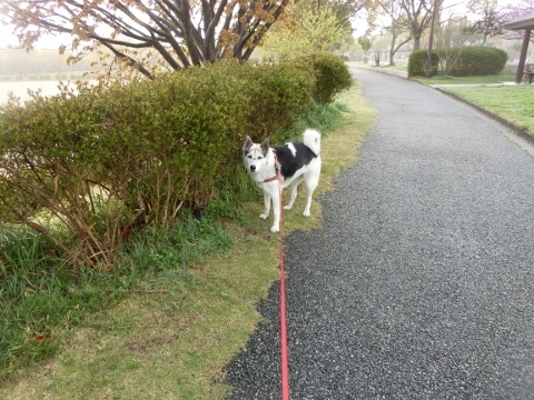 2018-04-12 散歩 002 (480x360)