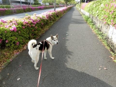 2018-05-06 散歩 002 (480x360)