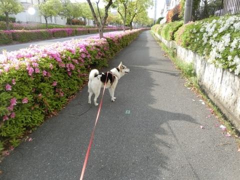 2018-05-06 散歩 003 (480x360)
