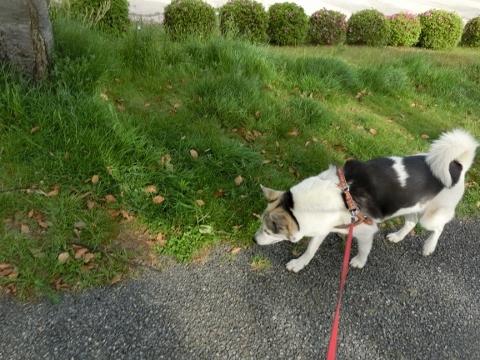 2018-05-06 散歩 006 (480x360)