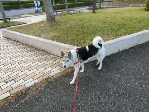 2018-06-16 散歩 005 (480x360)