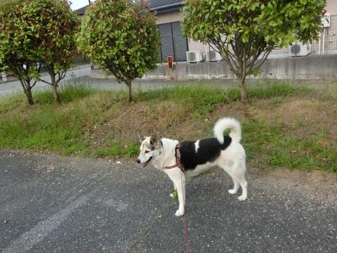 2018-06-27 散歩 006 (480x360)