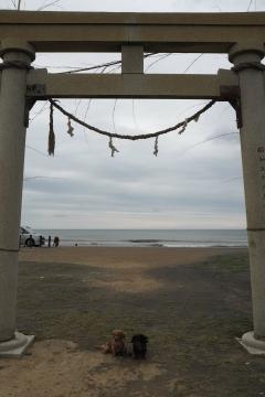 H30051303釣ケ崎海岸散歩