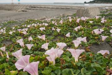 H30051308釣ケ崎海岸散歩