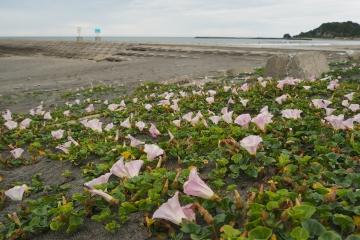 H30051307釣ケ崎海岸散歩
