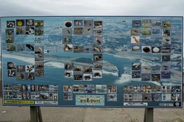 H30051306釣ケ崎海岸散歩