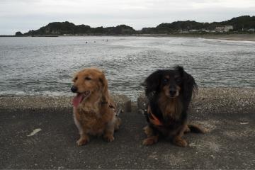 H30051310釣ケ崎海岸散歩