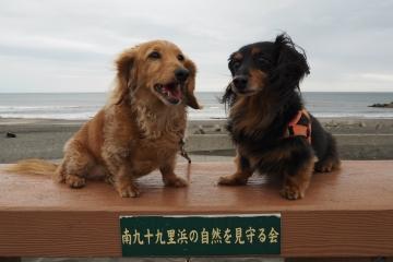 H30051313釣ケ崎海岸散歩