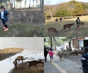 奈良公園7