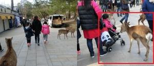 奈良公園8