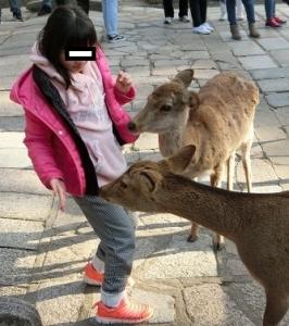 奈良公園12-0