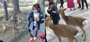 奈良公園12-1