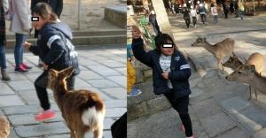 奈良公園12-2