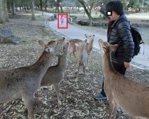 奈良公園14-1
