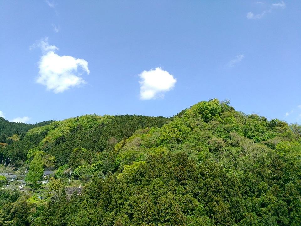 新緑と青空と雲