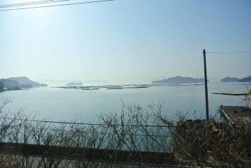 カキ筏と静かな海