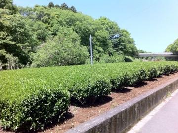 お茶の産地