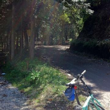 昔来た林道