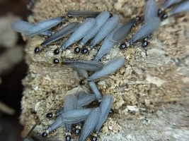 翅蟻の時期