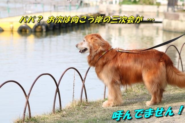 明石公園桜2018 053