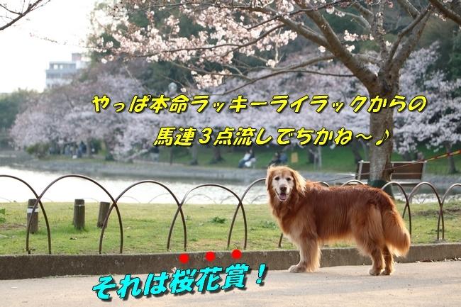 明石公園桜2018 205