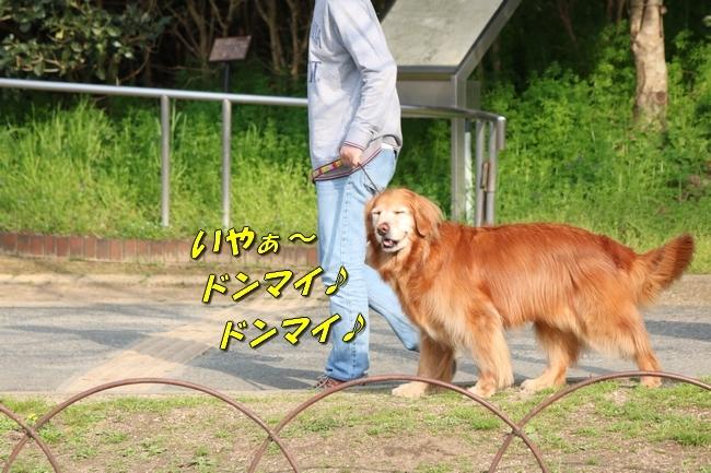 明石公園桜2018 037