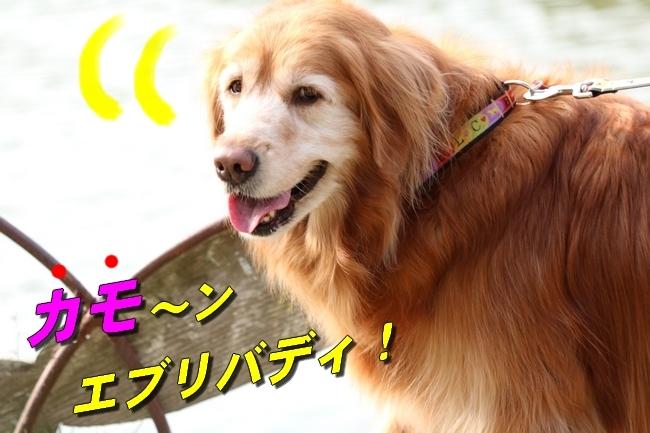 明石公園桜2018 097