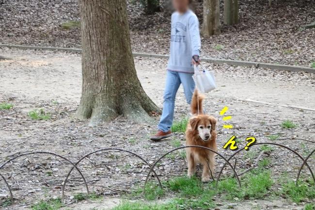 明石公園桜2018 276
