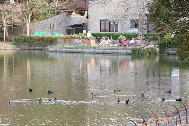明石公園桜2018 283